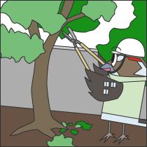 庭木の植栽、剪定工事